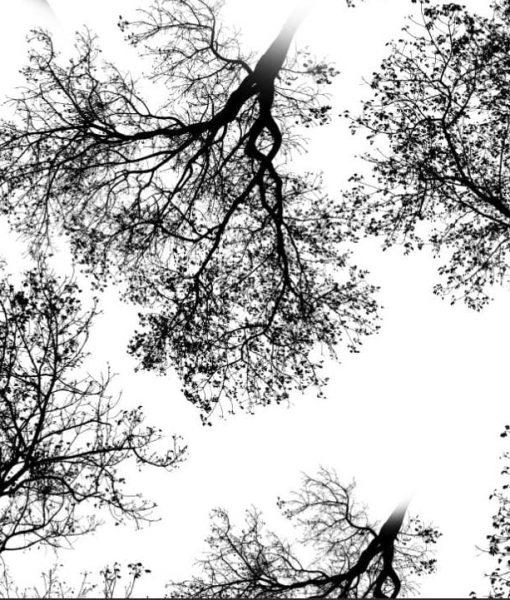 Kilpinis, skaitmeninės spaudos trikotažas Medžiai